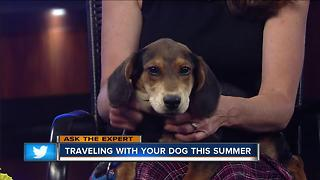 Ask the Expert: Traveling with your pet - Video