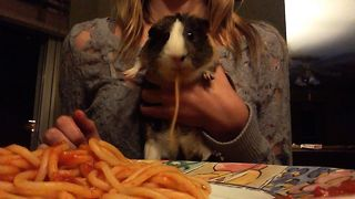 Guinea Pig Pasta Party - Video