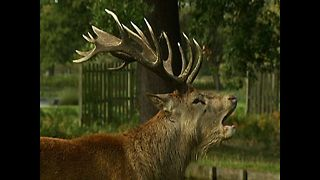 The Beast Of Bushy Park - Video