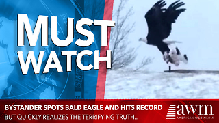 Bystander Spots Bald Eagle And Hits Record, Quickly Realizes Horrifying Sight - Video