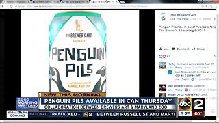 Penguin Pils to be available in cans this week - Video