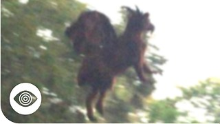 Does The Jersey Devil Exist? - Video