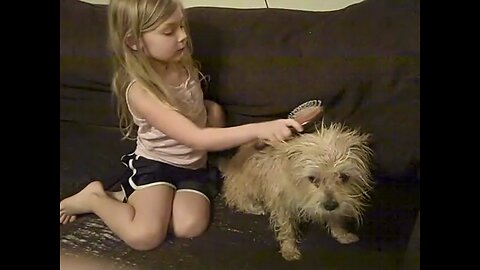How To Brush A Wet Dog