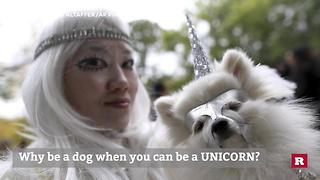 6 Costume Ideas For Your Dog This Halloween | Rare Animals - Video