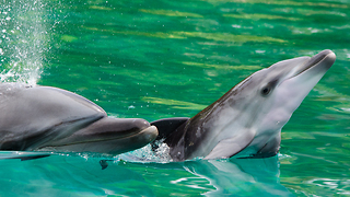Sea World Welcomes Baby Bottlenose Dolphin to Family - Video