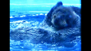 Baby Otter - Video