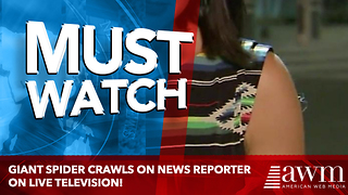 Spider Crawls Down Unsuspecting Reporter's Arm - Video