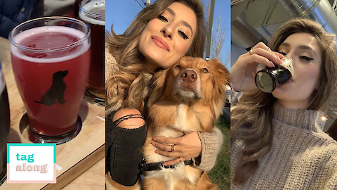 Enjoy A Craft Beer In Toronto's Dog Friendly Brewery