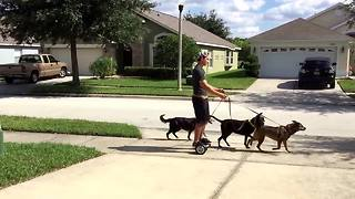 Lazy Man Uses Hoverboard To Walk His Dogs Without Walking - Video