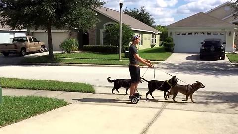Lazy Man Uses Hoverboard To Walk His Dogs Without Walking