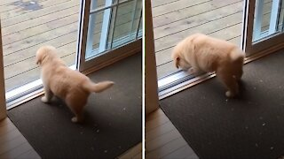 Puppy's first time conquering doorstep is simply adorable