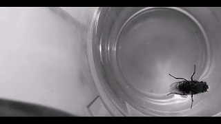 Fly Heroically Rescued from Glass of Water