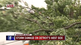 Storms down trees in Detroit - Video