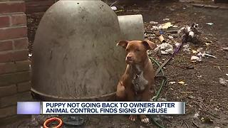 Puppy not going back to owners after animal control finds signs of abuse - Video
