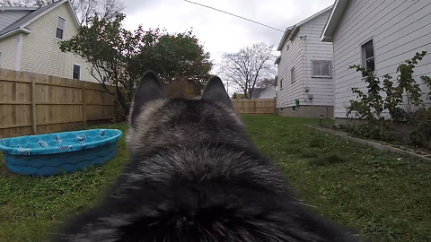 Day In The Life of a Husky!