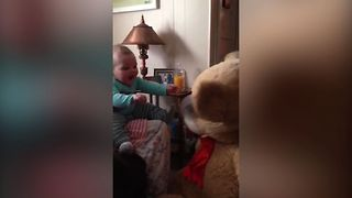 Small Baby Meets Big Teddy - Video