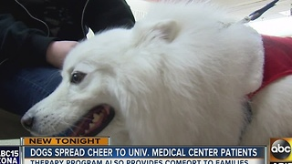 Four-legged Santa bringing cheer to Valley patients - Video