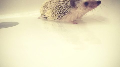 Me is Lucy the Hedgehog