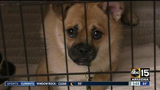 Animal shelters preparing for busy July 4th holiday - Video