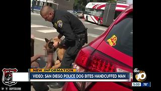 Video shows man caught in bite by SDPD K9 - Video
