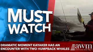 Dramatic moment kayaker has aN encounter with TWO humpback whales - Video
