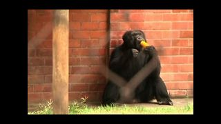 Rio Animals Chill Out - Video