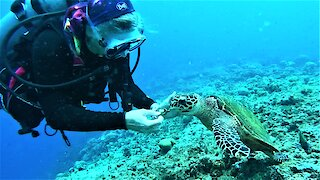 Scuba diver melts after friendly wild sea turtle captures her heart