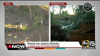 Phoenix Zoo to re-open on Saturday after storm damage - Video