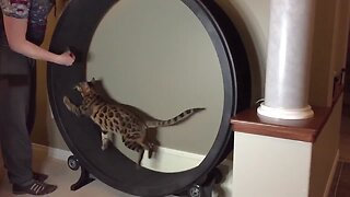Cats In Slow Motion