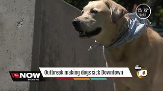 Dog disease on the rise in San Diego - Video