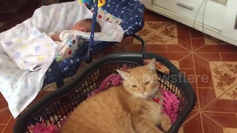 Jealous cat loves to be rocked in 'cradle' like a baby