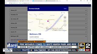 Pink Megabus comes to White Marsh Park and Ride - Video