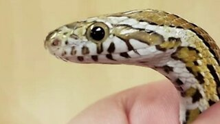 Snake discovered in washing machine smelled downy fresh