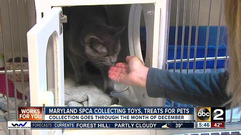Maryland SPCA collecting toys and treats to fill the Presents for Pets sleigh