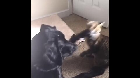 Puppy & kitten introduced to each other, become the best of friends