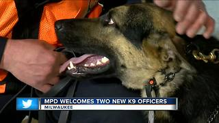 Milwaukee Police introduce new police dogs Brewer, Rocker