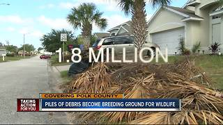 Post-Irma debris attracting rats, snakes in Polk County - Video