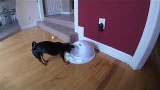 Clever Puppy Loves Solving Puzzles For Treats