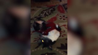 Cute Dog Loves To Hit The Dance Floor