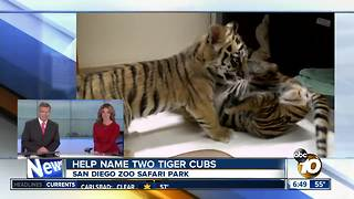 Help name San Diego Zoo Safari Park tiger cubs - Video