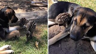 Dog And Baby Emu Become Inseparable After Forming Unlikely Friendship