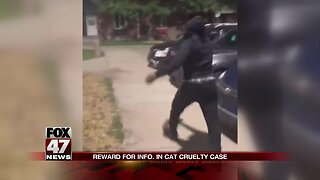 Community disturbed by cat abuse video