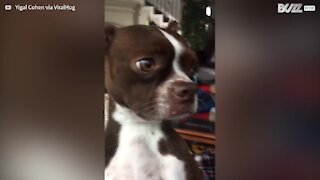 Dog's hilarious apology after eating duck food