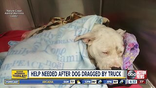 Pitbull wags tail through recovery after being dragged by truck in Hernando County