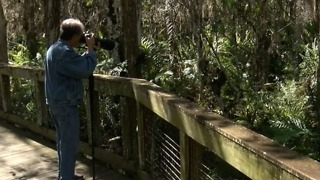 Scientists label the Everglades as critically endangered - Video