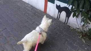 Dog Confuses Painting of Cat on Wall for Real Life - Video