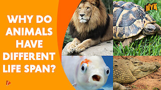 Why Do Animal Have Different Life Span *