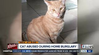 Cat attacked during home burglary - Video