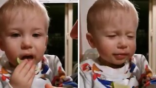 Baby tries eating lemon, has the most priceless reaction