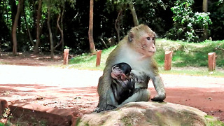 Poor Baby Monkey Can't Run Away From Kidnapper
